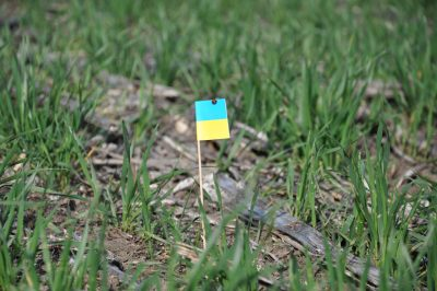 Little ukrainian flag in a field.